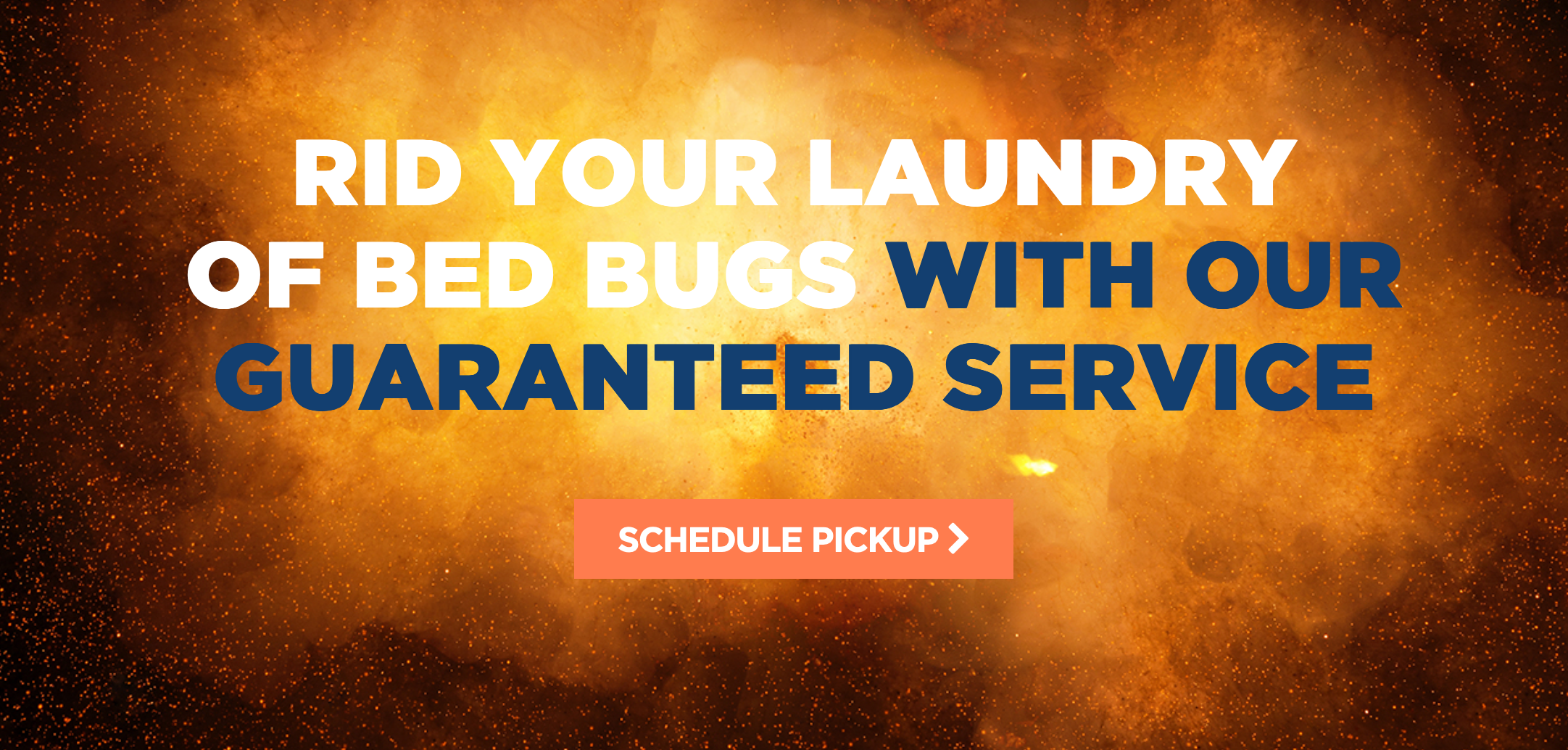 bed bug laundry service